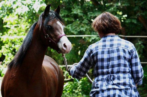 SEP & cheval : un programme pour la sclérose en plaques Montbrison