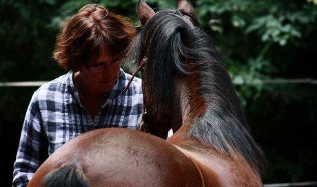 Analyse de la pratique professionnelle - médiation animale Clermont-Ferrand