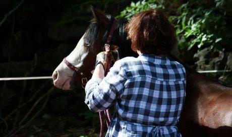 Médiation animale pour les troubles de la concentration Montbrison