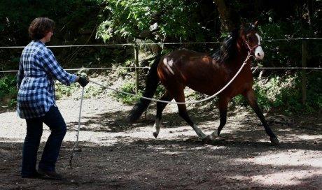Médiation animale en groupe à Montbrison